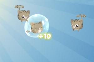 Kitten Can Fly